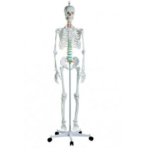 esqueleto-oscar