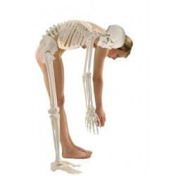 squelette-humain-hugo-erler-zimmer-min-1
