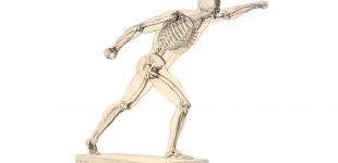 squelette-humain-310x150