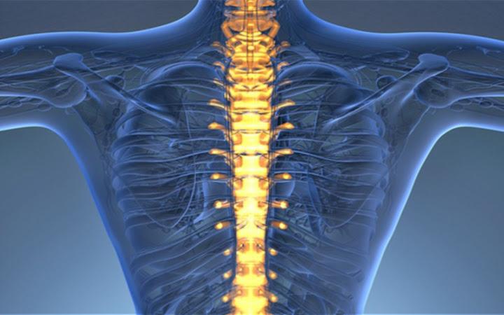 columna_vertebral-1