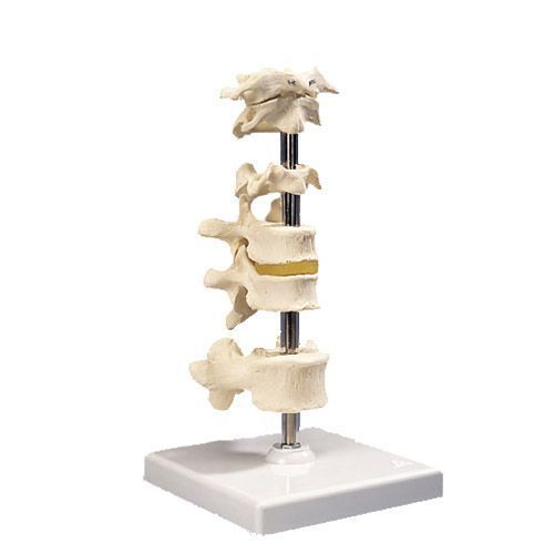 6 Vértebras articuladas 3B scientific A75