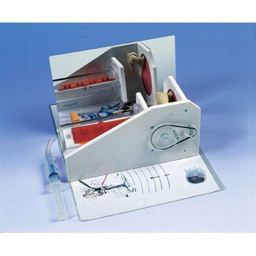 Modelo funcional del oído 3B scientific W16010